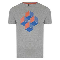 T-shirty chłopięce z nadrukiem: T-shirt w kolorze szarym