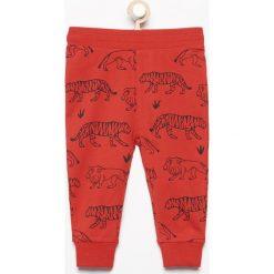 Odzież niemowlęca: Spodnie dresowe z nadrukiem zwierząt - Czerwony