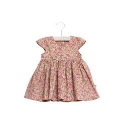Sukienki niemowlęce: WHEAT Sukienka Christel powder