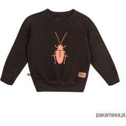 Odzież chłopięca: bluza - karaluszek