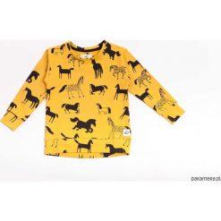 Bluza Mustard Horses. Żółte bluzy chłopięce rozpinane marki Pakamera, z bawełny. Za 79,00 zł.