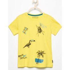 Odzież chłopięca: T-shirt z tropikalnym nadrukiem – Zielony
