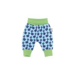 Sigikid Boys Spodnie Jersey sky blue. Niebieskie spodnie chłopięce SIGIKID, z bawełny. Za 89,00 zł.
