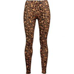 Legginsy: Alcatraz Leopard Legginsy brązowy/czarmy