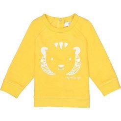 Bluzy niemowlęce: Bluza z lwem – 0-24 mies.