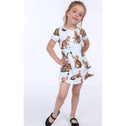 Sukienka dziewczęca w koty niebieska NDZ8164. Szare sukienki dziewczęce marki Fasardi. Za 49,00 zł.