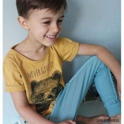T-shirty chłopięce: Koszulka Never give up musztardowa