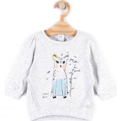 Koszulka. Szare bluzki dziewczęce bawełniane FAMILY FOREST, z aplikacjami, z falbankami, z długim rękawem. Za 29,90 zł.