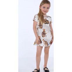 Sukienka dziewczęca w koty szara NDZ8164. Szare sukienki dziewczęce marki Fasardi. Za 49,00 zł.