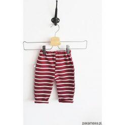 Spodnie burgund stripes. Czerwone spodnie niemowlęce Pakamera, z bawełny, długie. Za 60,00 zł.